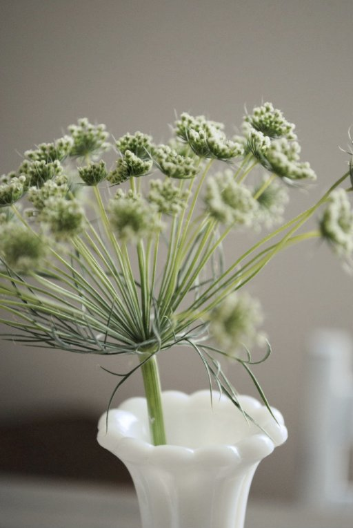 queen anne's lace, milk glass, vintage, rustic